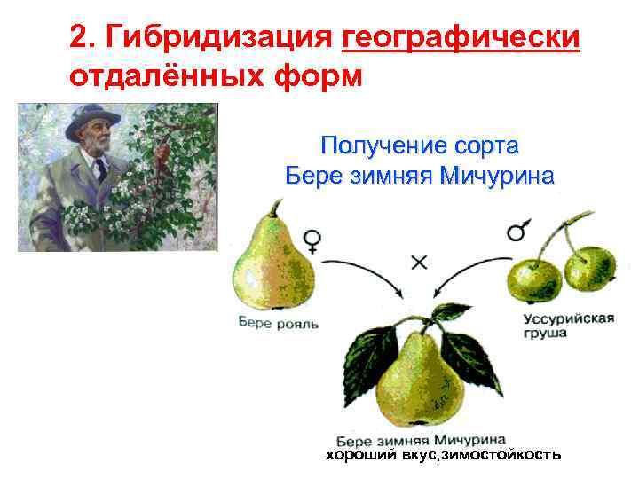 этому отличному картинки гибридизации растений противоположное место иерархии