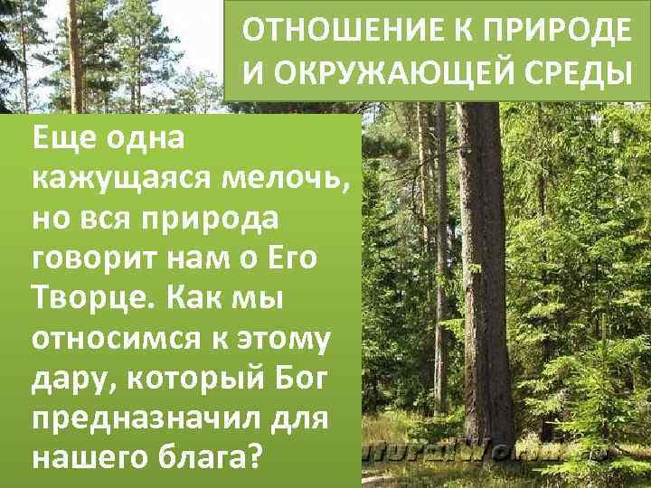 ОТНОШЕНИЕ К ПРИРОДЕ И ОКРУЖАЮЩЕЙ СРЕДЫ Еще одна кажущаяся мелочь, но вся природа говорит