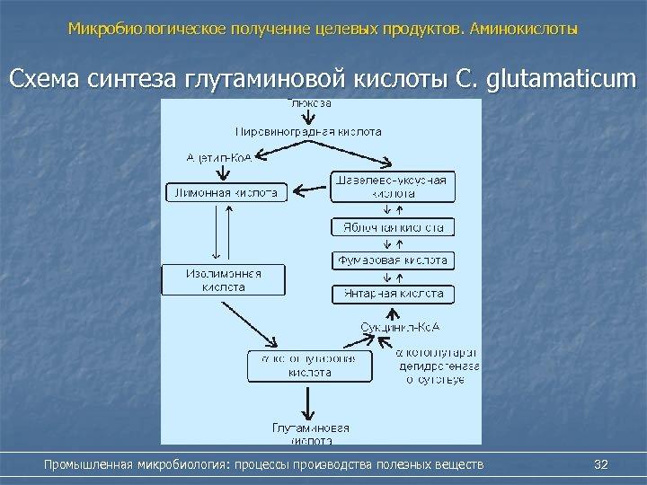 Микробиологическое получение целевых продуктов. Аминокислоты Схема синтеза глутаминовой кислоты С. glutamaticum Промышленная микробиология: процессы