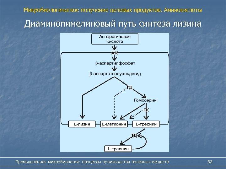 Микробиологическое получение целевых продуктов. Аминокислоты Диаминопимелиновый путь синтеза лизина Промышленная микробиология: процессы производства полезных