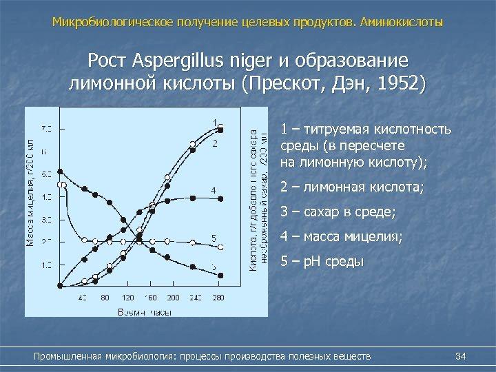 Микробиологическое получение целевых продуктов. Аминокислоты Рост Aspergillus niger и образование лимонной кислоты (Прескот, Дэн,