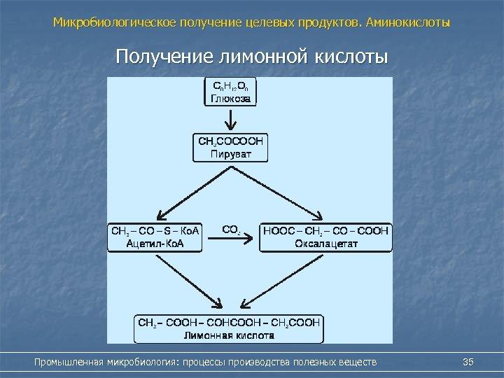 Микробиологическое получение целевых продуктов. Аминокислоты Получение лимонной кислоты Промышленная микробиология: процессы производства полезных веществ