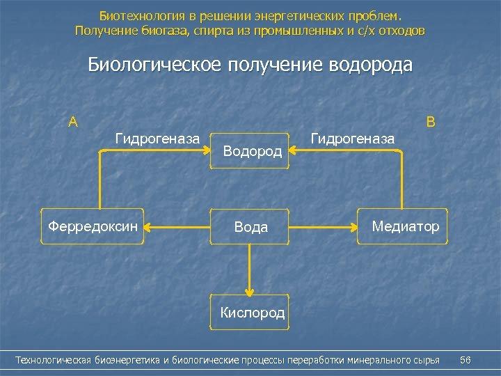 Биотехнология в решении энергетических проблем. Получение биогаза, спирта из промышленных и с/х отходов Биологическое