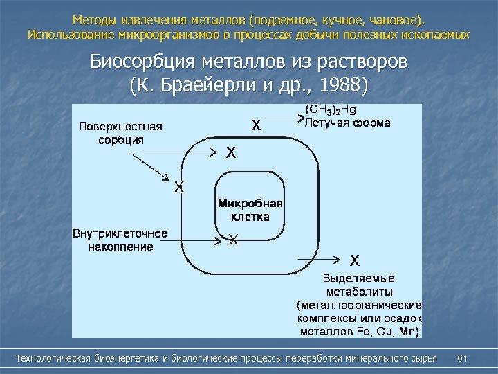 Методы извлечения металлов (подземное, кучное, чановое). Использование микроорганизмов в процессах добычи полезных ископаемых Биосорбция