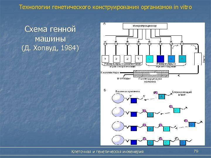 Технологии генетического конструирования организмов in vitro Схема генной машины (Д. Хопвуд, 1984) Клеточная и