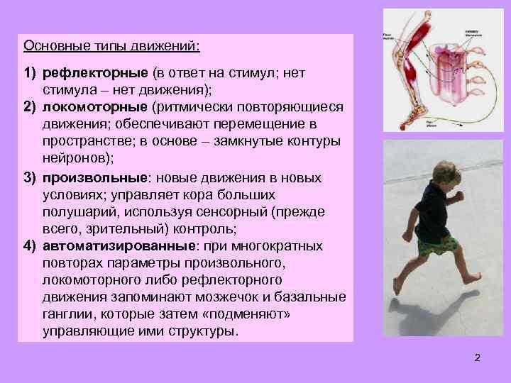 Основные типы движений: 1) рефлекторные (в ответ на стимул; нет стимула – нет движения);