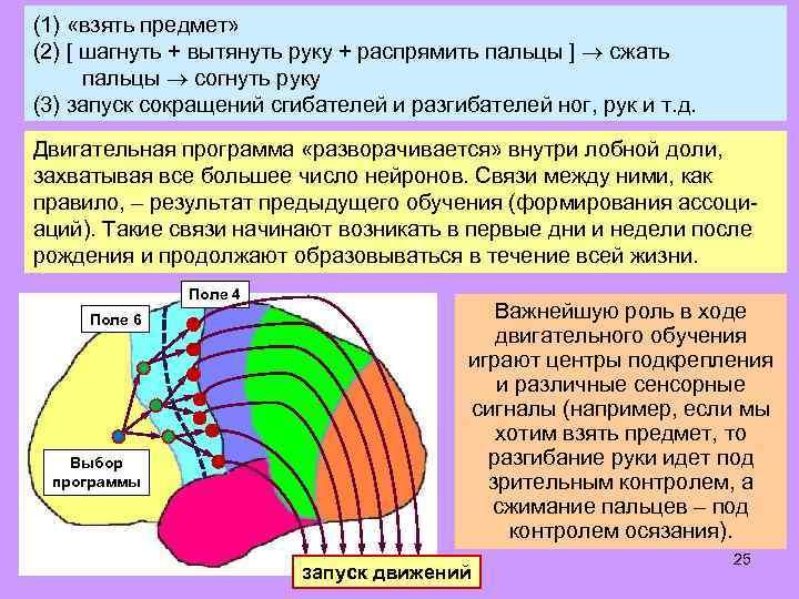 (1) «взять предмет» (2) [ шагнуть + вытянуть руку + распрямить пальцы ] сжать