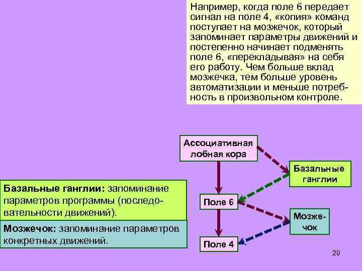 Например, когда поле 6 передает сигнал на поле 4, «копия» команд поступает на мозжечок,