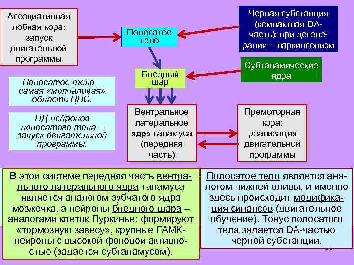Ассоциативная лобная кора: запуск двигательной программы Полосатое тело – самая «молчаливая» область ЦНС. ПД