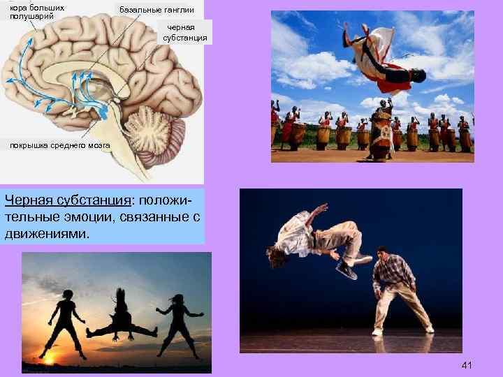кора больших полушарий базальные ганглии черная субстанция покрышка среднего мозга Черная субстанция: положительные эмоции,