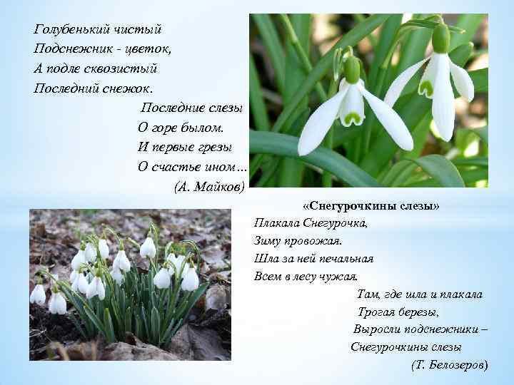 Голубенький чистый Подснежник - цветок, А подле сквозистый Последний снежок. Последние слезы О горе