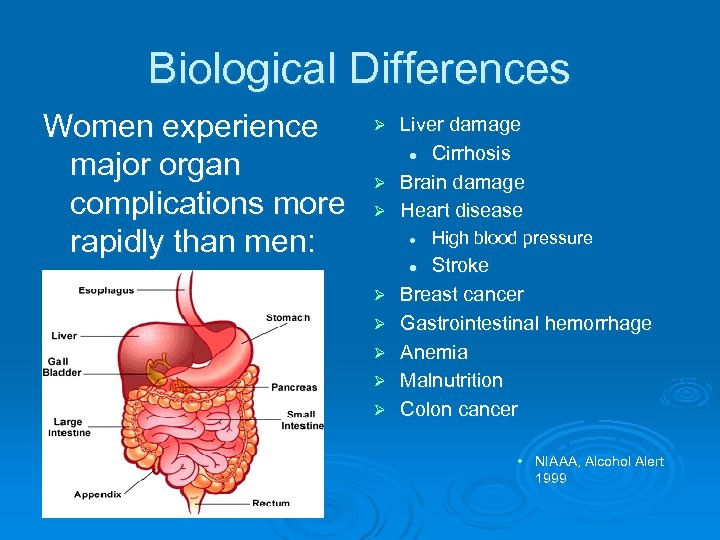 Biological Differences Women experience major organ complications more rapidly than men: Liver damage l