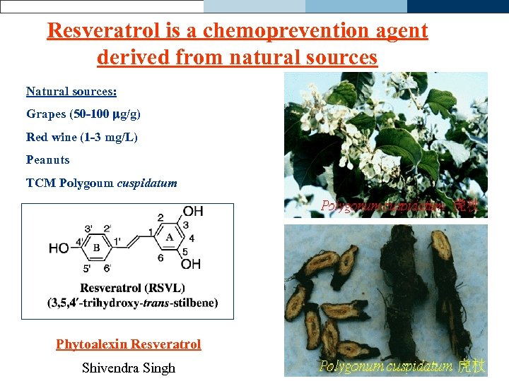 Resveratrol is a chemoprevention agent derived from natural sources Natural sources: Grapes (50 -100