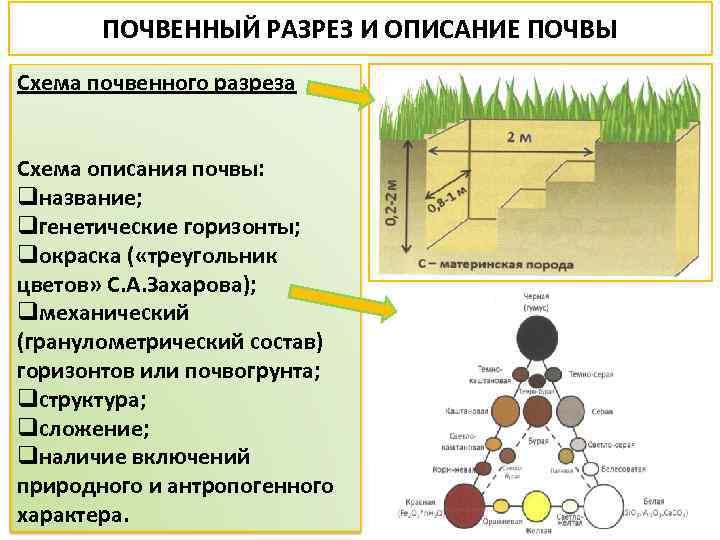 ПОЧВЕННЫЙ РАЗРЕЗ И ОПИСАНИЕ ПОЧВЫ Схема почвенного разреза Схема описания почвы: qназвание; qгенетические горизонты;