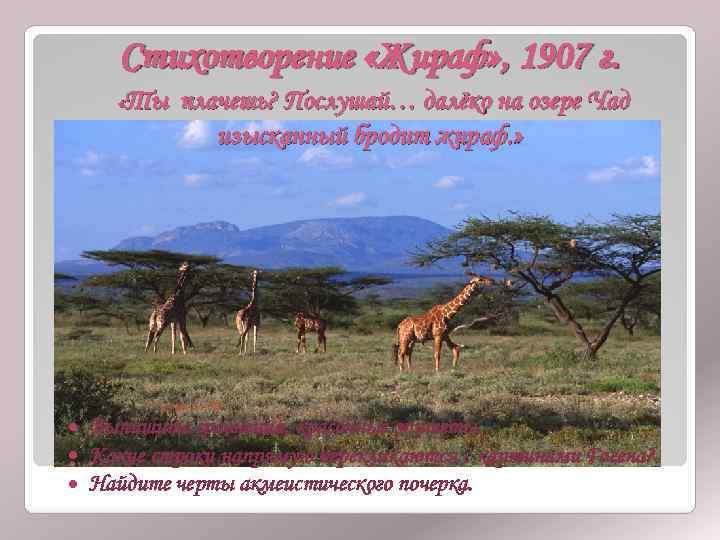 Стихотворение «Жираф» , 1907 г. «Ты плачешь? Послушай… далёко на озере Чад изысканный бродит