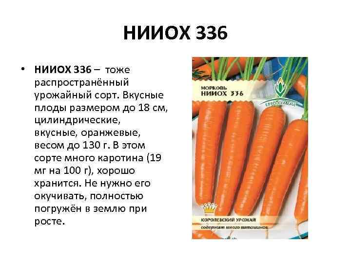 НИИОХ 336 • НИИОХ 336 – тоже распространённый урожайный сорт. Вкусные плоды размером до