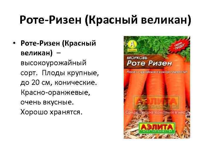 Роте-Ризен (Красный великан) • Роте-Ризен (Красный великан) – высокоурожайный сорт. Плоды крупные, до 20