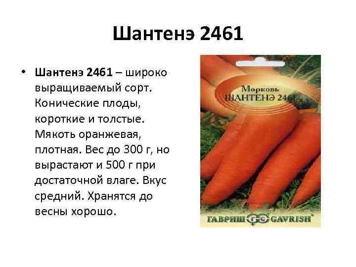 Шантенэ 2461 • Шантенэ 2461 – широко выращиваемый сорт. Конические плоды, короткие и толстые.