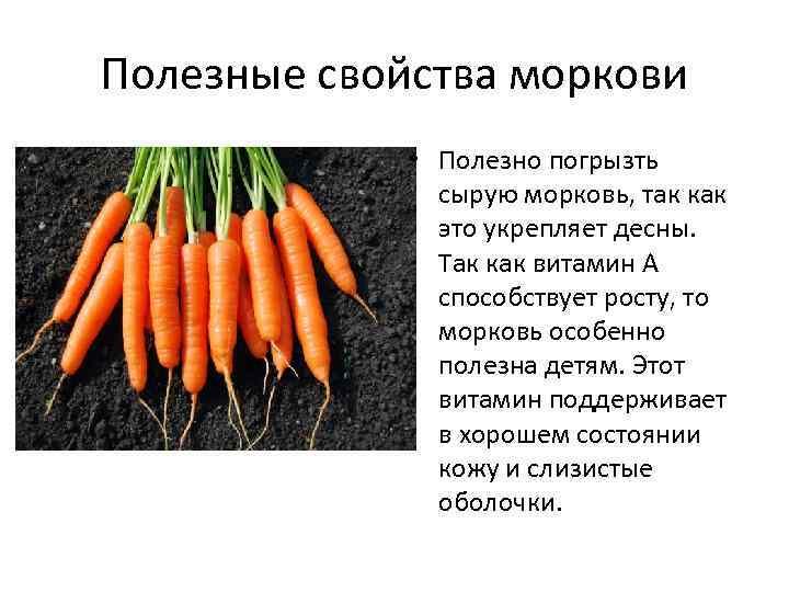 Полезные свойства моркови • Полезно погрызть сырую морковь, так как это укрепляет десны. Так