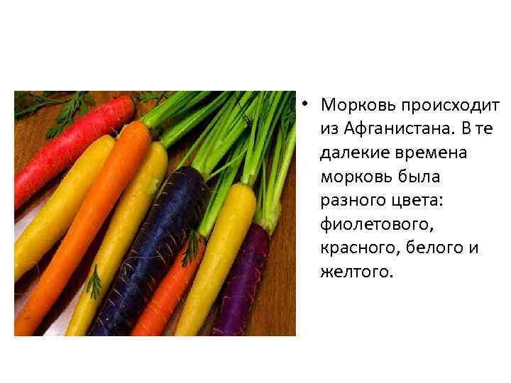 • Морковь происходит из Афганистана. В те далекие времена морковь была разного цвета: