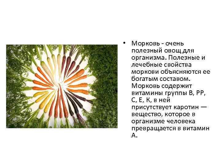 • Морковь - очень полезный овощ для организма. Полезные и лечебные свойства моркови
