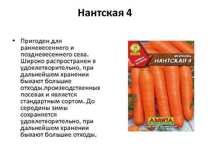 Нантская 4 • Пригоден для ранневесеннего и поздневесеннего сева. Широко распространен в удовлетворительно, при