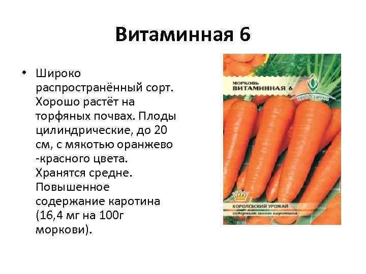 Витаминная 6 • Широко распространённый сорт. Хорошо растёт на торфяных почвах. Плоды цилиндрические, до