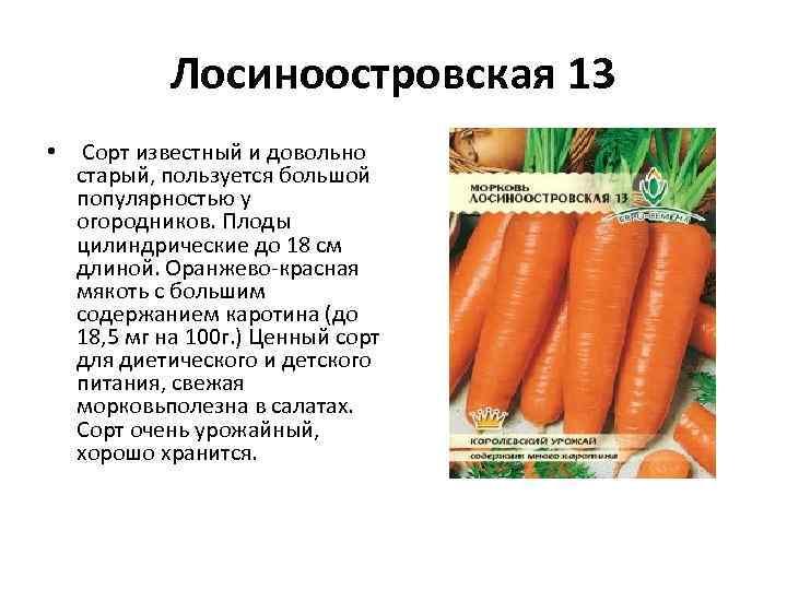 Лосиноостровская 13 • Сорт известный и довольно старый, пользуется большой популярностью у огородников. Плоды
