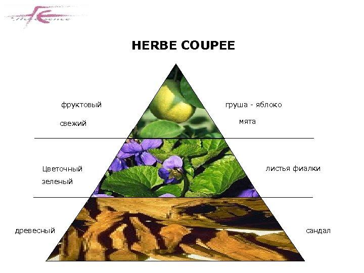 HERBE COUPEE фруктовый свежий Цветочный груша - яблоко мята листья фиалки зеленый древесный сандал
