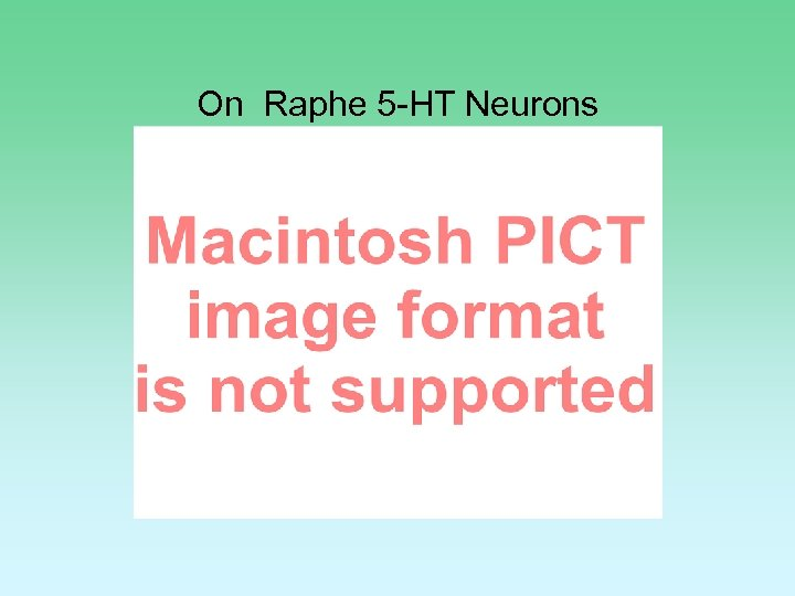 On Raphe 5 -HT Neurons *=p<0. 05 **=P<0. 01