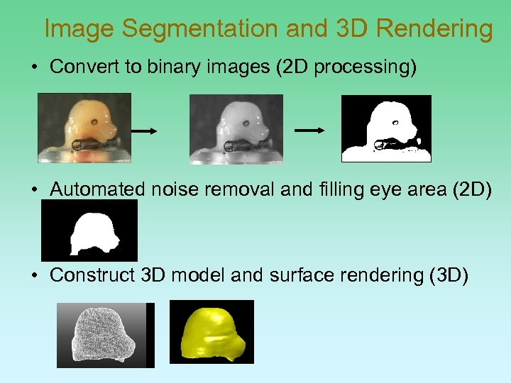 Image Segmentation and 3 D Rendering • Convert to binary images (2 D processing)