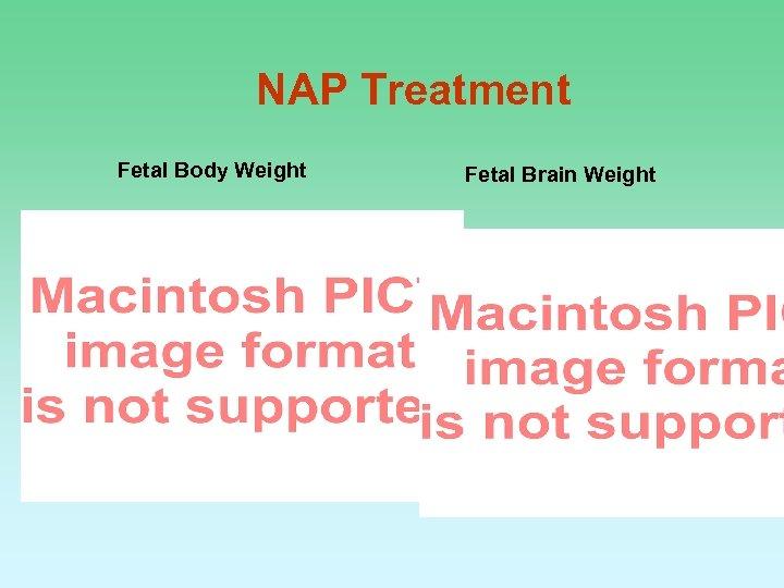 NAP Treatment Fetal Body Weight Fetal Brain Weight