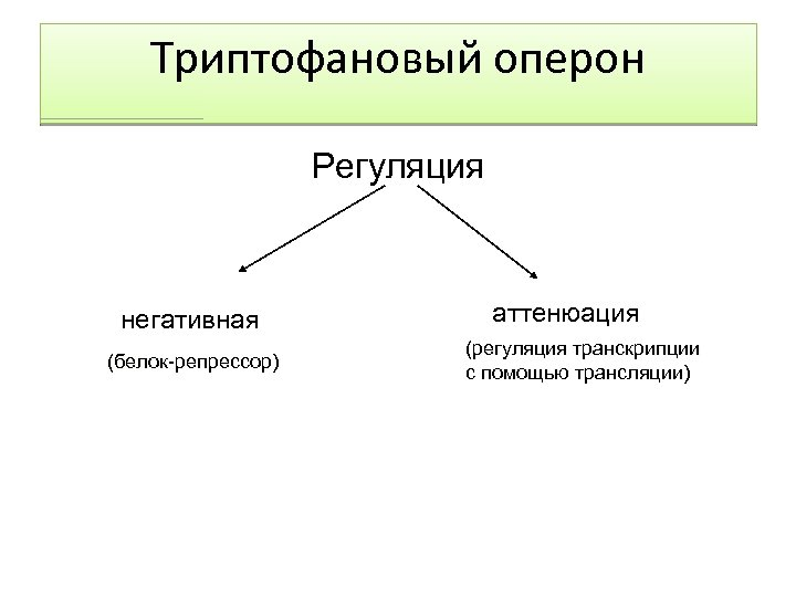 Триптофановый оперон Регуляция негативная (белок-репрессор) аттенюация (регуляция транскрипции с помощью трансляции)