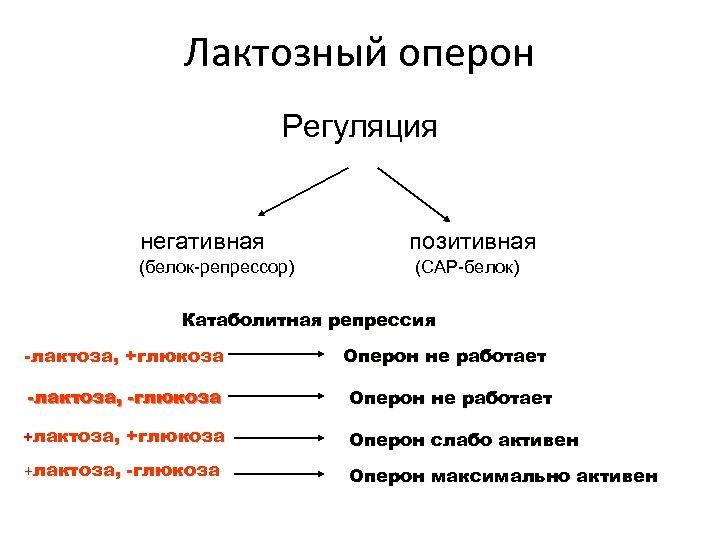 Лактозный оперон Регуляция негативная (белок-репрессор) позитивная (CAP-белок) Катаболитная репрессия -лактоза, +глюкоза Оперон не работает