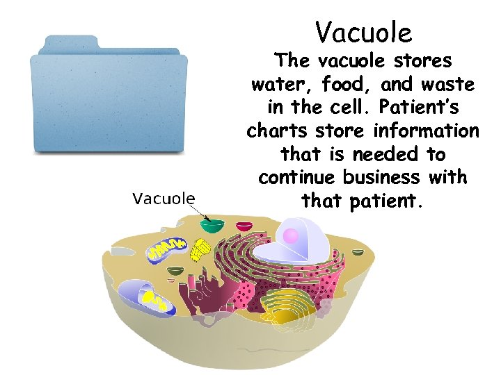 Vacuole The vacuole stores water, food, and waste in the cell. Patient's charts store