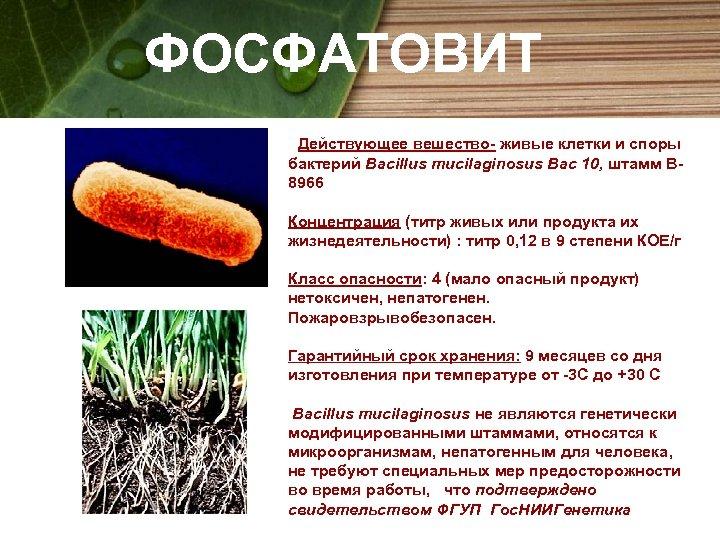 ФОСФАТОВИТ Действующее вешество- живые клетки и споры бактерий Bacillus mucilaginosus Bac 10, штамм В