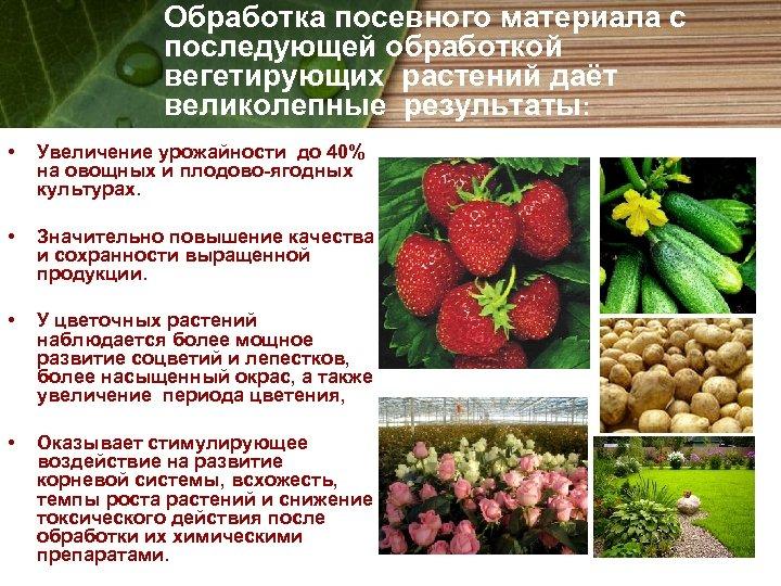 Обработка посевного материала с последующей обработкой вегетирующих растений даёт великолепные результаты: • Увеличение урожайности