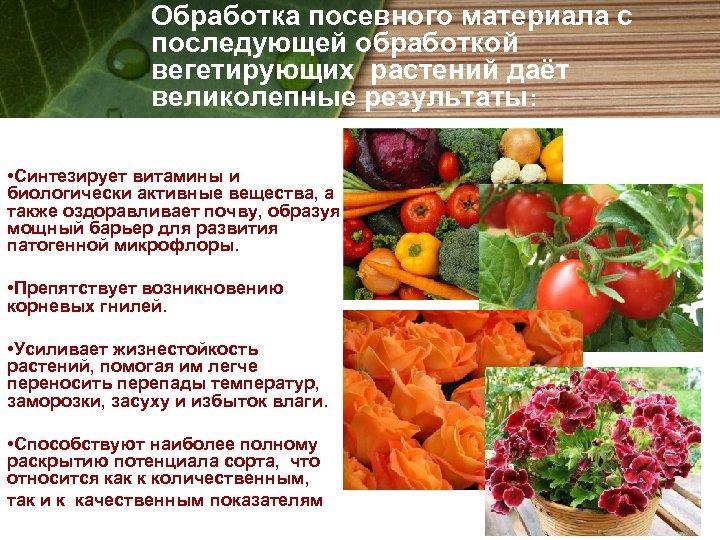 Обработка посевного материала с последующей обработкой вегетирующих растений даёт великолепные результаты: • Синтезирует витамины