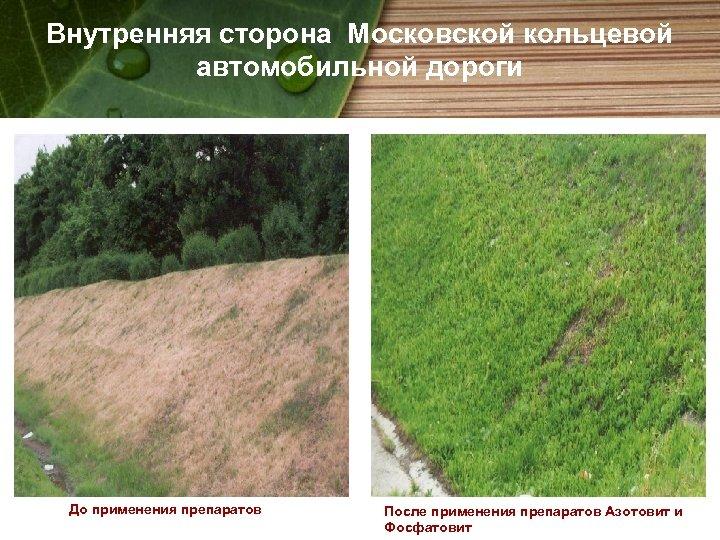 Внутренняя сторона Московской кольцевой автомобильной дороги До применения препаратов После применения препаратов Азотовит и