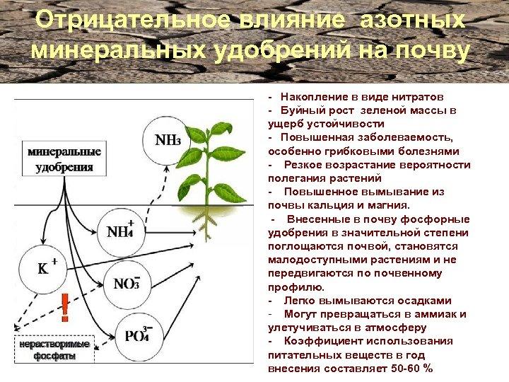 Отрицательное влияние азотных минеральных удобрений на почву - Накопление в виде нитратов - Буйный
