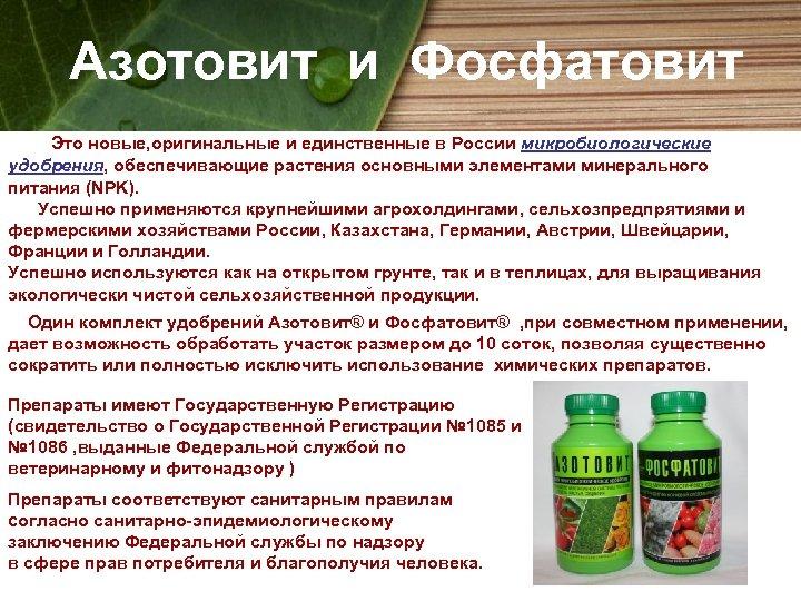 Азотовит и Фосфатовит Это новые, оригинальные и единственные в России микробиологические удобрения, обеспечивающие растения