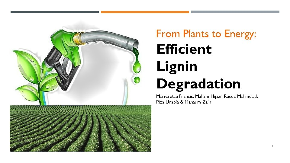 From Plants to Energy: Efficient Lignin Degradation BIOFUELS Margarette Francis, Maham Hijazi, Reeda Mahmood,