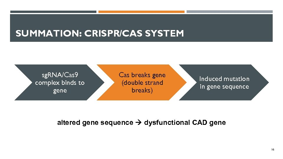 SUMMATION: CRISPR/CAS SYSTEM sg. RNA/Cas 9 complex binds to gene Cas breaks gene (double