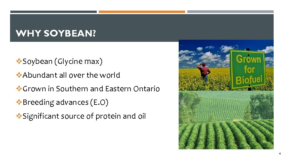 WHY SOYBEAN? v. Soybean (Glycine max) v. Abundant all over the world v. Grown