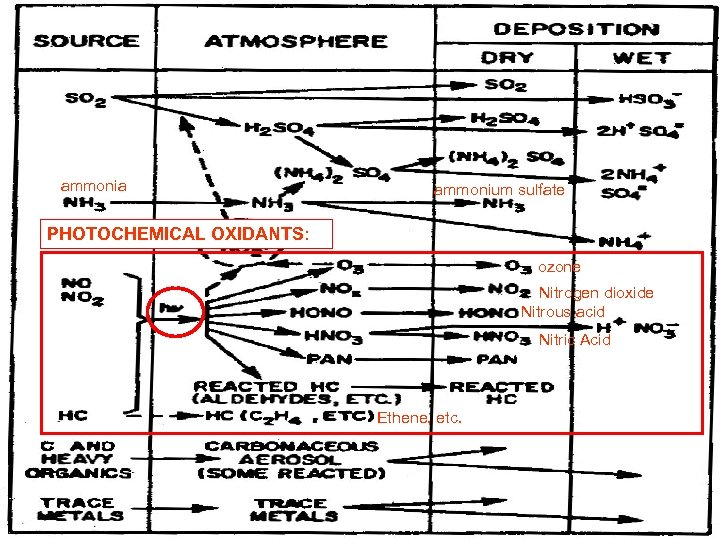 ammonia ammonium sulfate PHOTOCHEMICAL OXIDANTS: ozone Nitrogen dioxide Nitrous acid Nitric Acid Ethene, etc.
