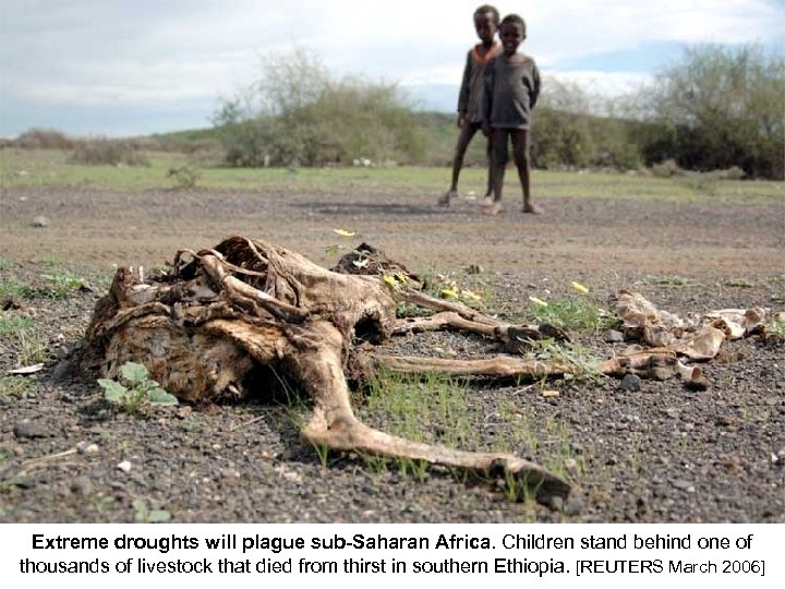 Extreme droughts will plague sub-Saharan Africa. Children stand behind one of thousands of livestock