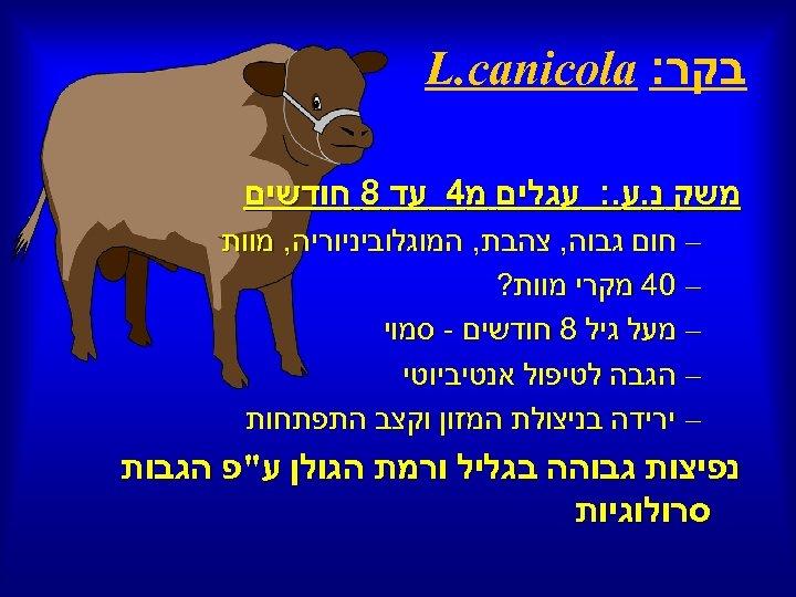 בקר: L. canicola משק נ. ע. : עגלים מ 4 עד 8 חודשים