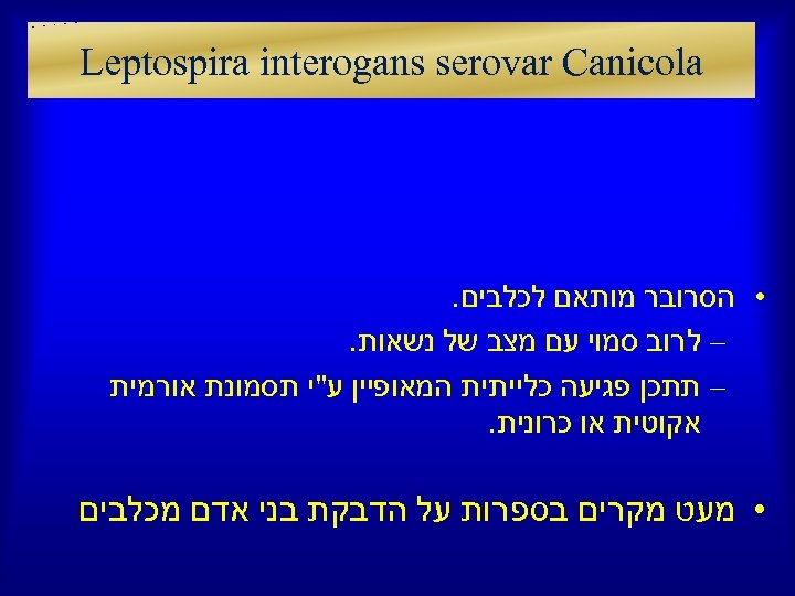 Leptospira interogans serovar Canicola • הסרובר מותאם לכלבים. – לרוב סמוי עם מצב