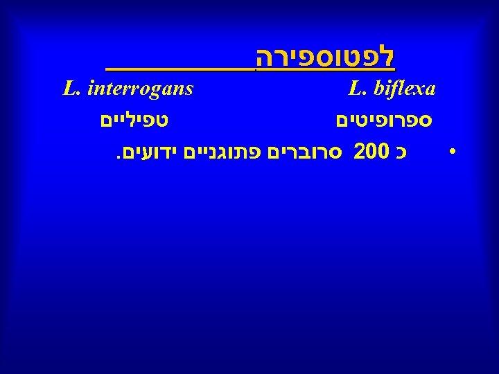 לפטוספירה L. biflexa L. interrogans ספרופיטים טפיליים כ 002 סרוברים פתוגניים ידועים. •