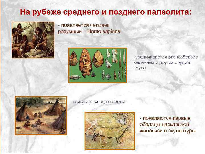 На рубеже среднего и позднего палеолита: - появляется человек разумный – Homo sapiens -увеличивается